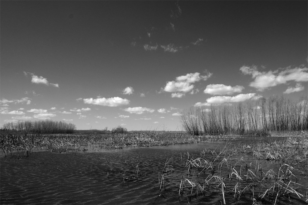 Wetlands by lsquared