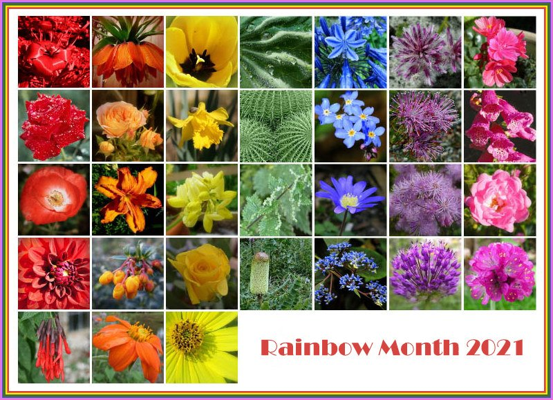 Rainbow Month Calendar  by judithdeacon