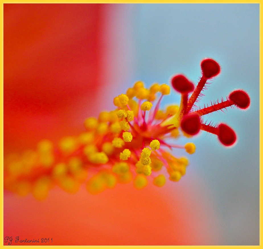 Hibiscus Up Close & Personal by bluemoon