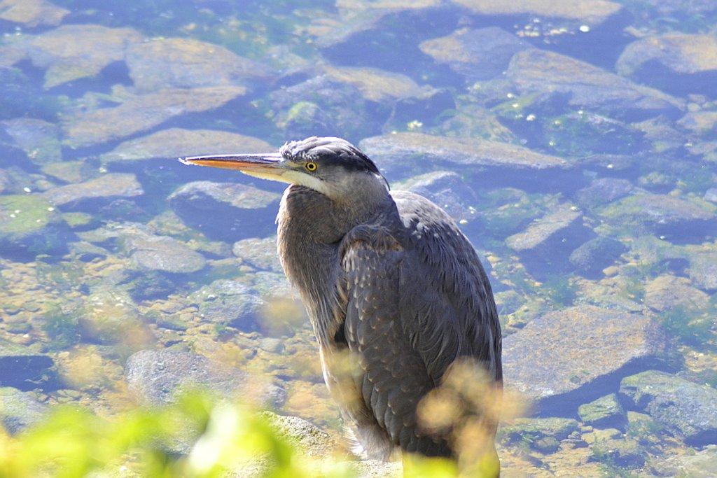 Upset Heron by stephomy