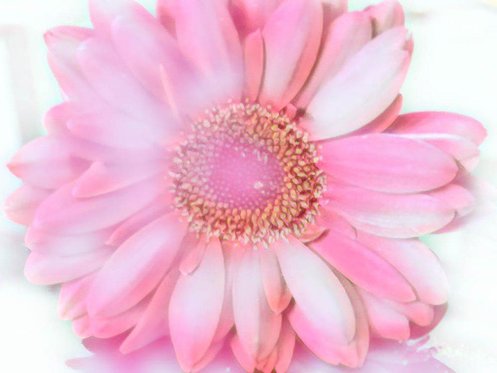 Flowers by joansmor