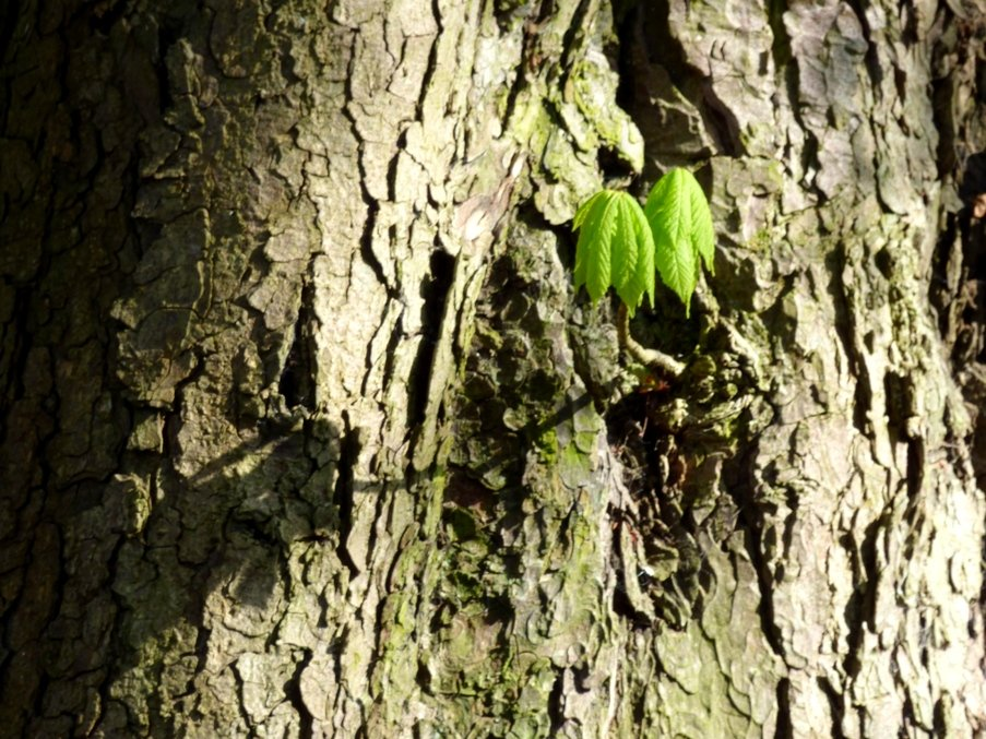 New Growth by fishers
