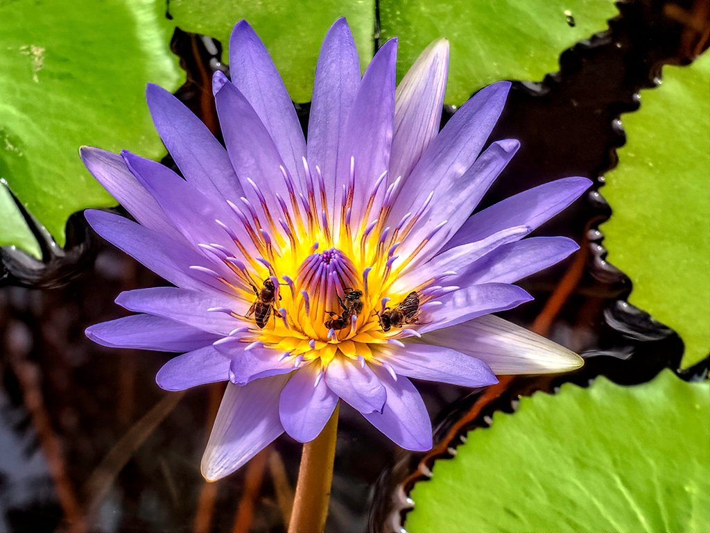 The waterlily used for the kaleidoscope by ludwigsdiana