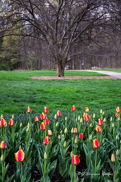 Spring Growth Early & Late by ggshearron