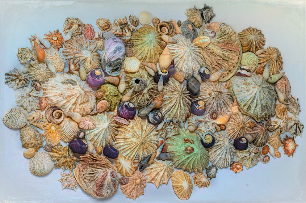 Shell collection by ludwigsdiana