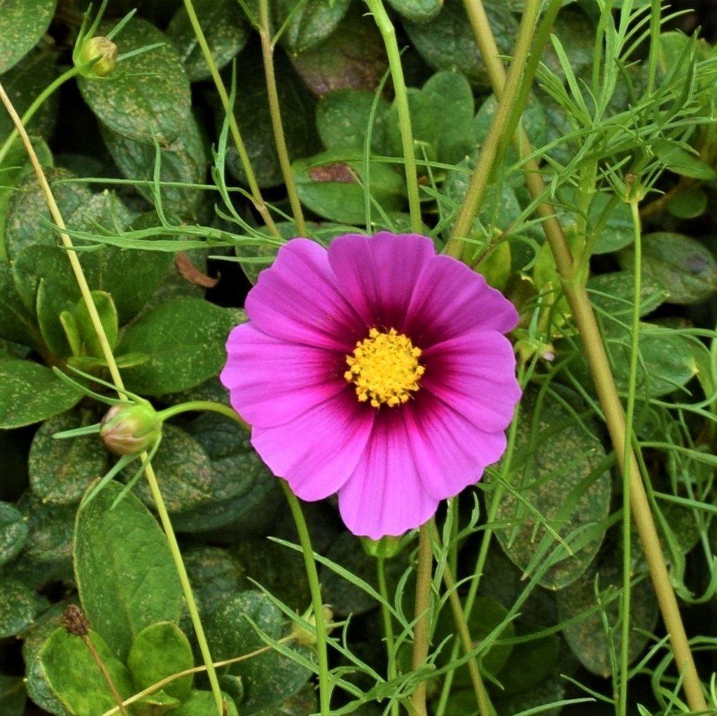 One Purple Flower ~              by happysnaps