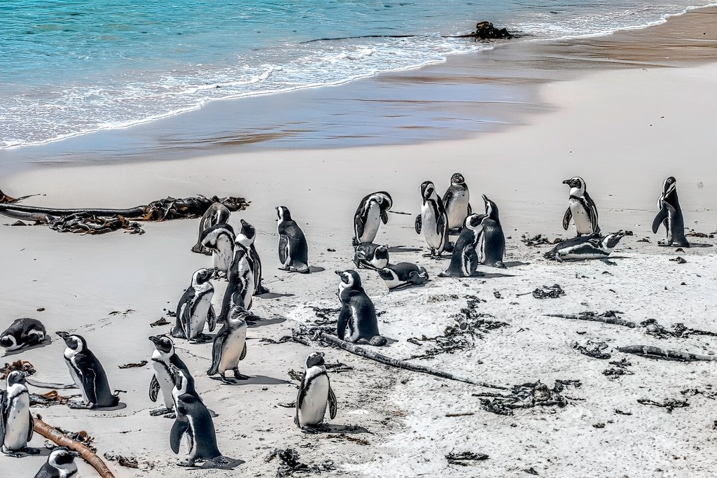 Boulders Penguin colony by ludwigsdiana