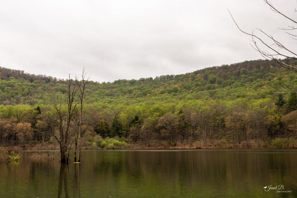 Allegheny Reservoir by janetb