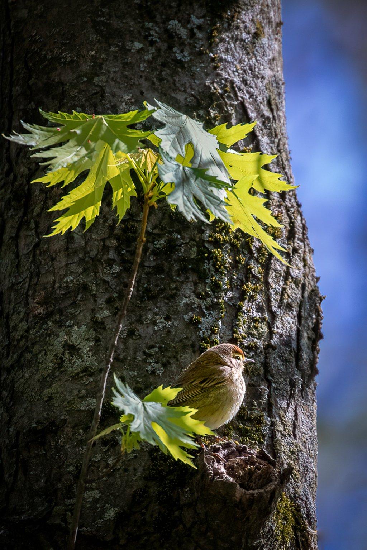 Palm Warbler in the Woods by jyokota