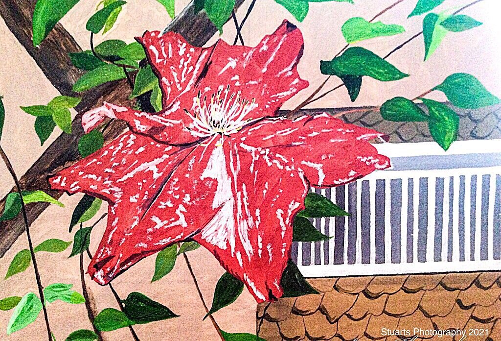 Clematis (painting) by stuart46