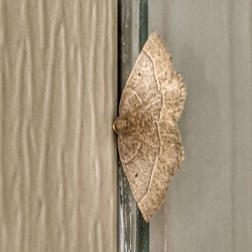 A tiny moth on the front door  by louannwarren
