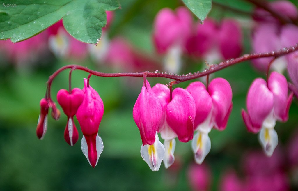 Pretty flowers by novab