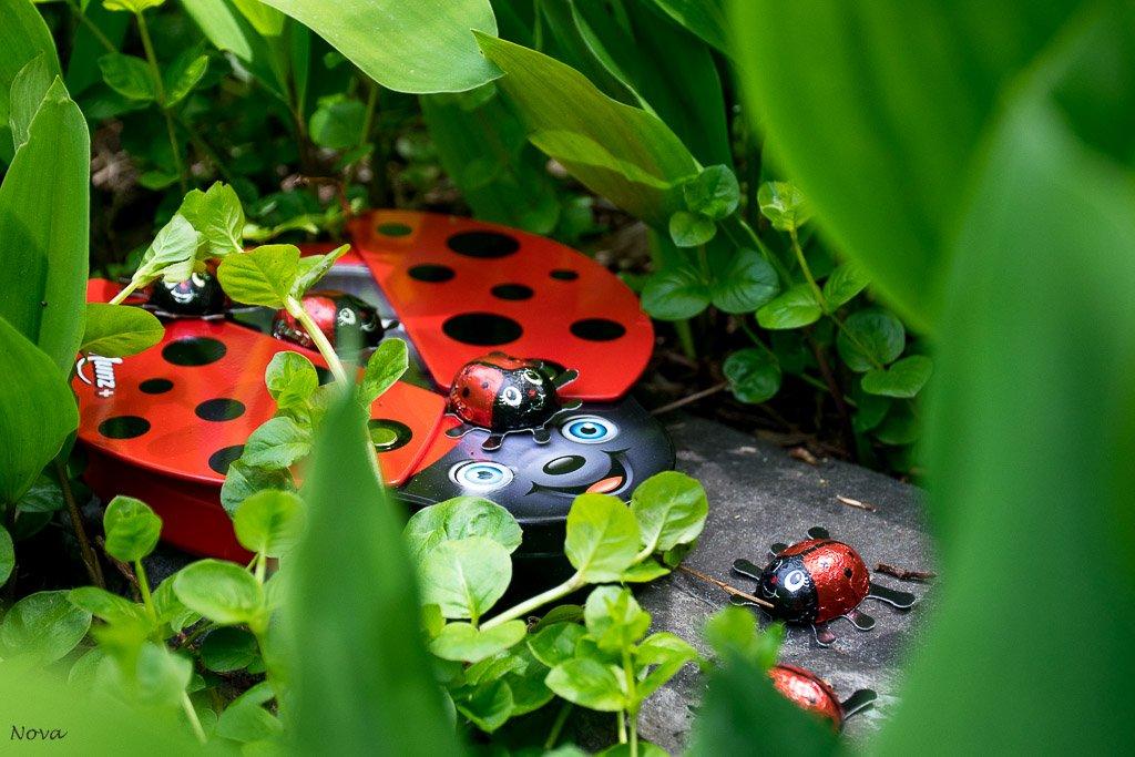 Garden ladybirds by novab