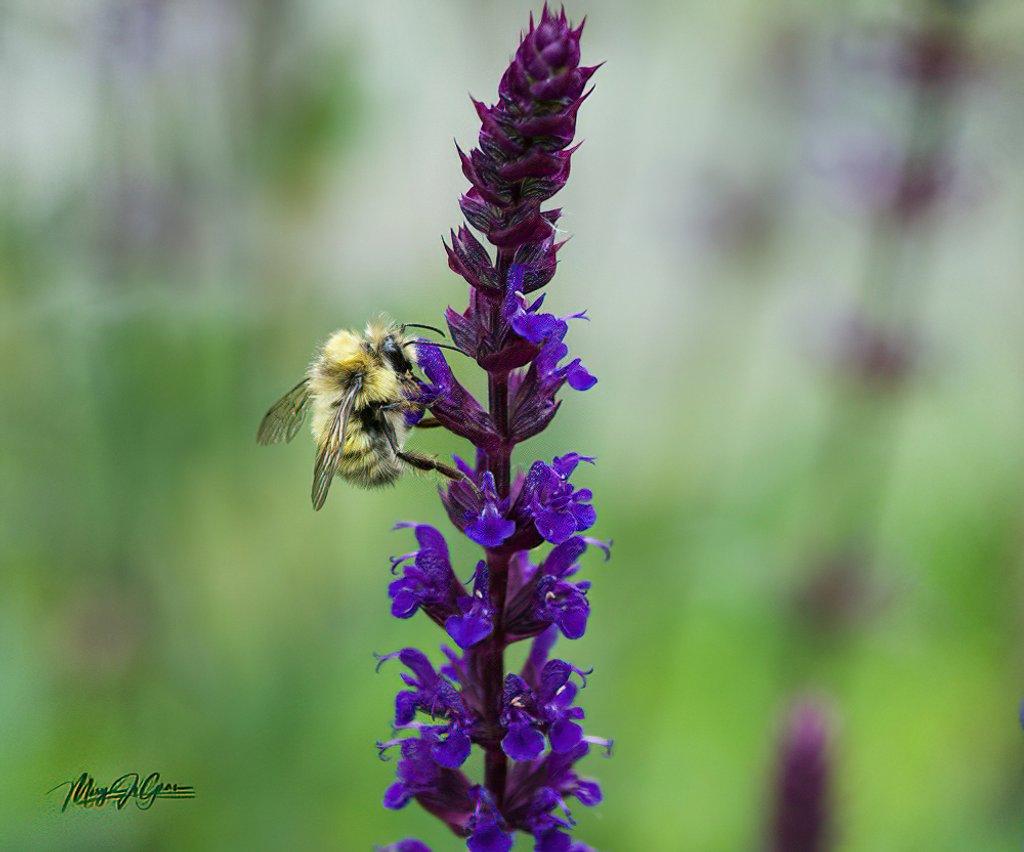 ~Buzy Bee~ by crowfan