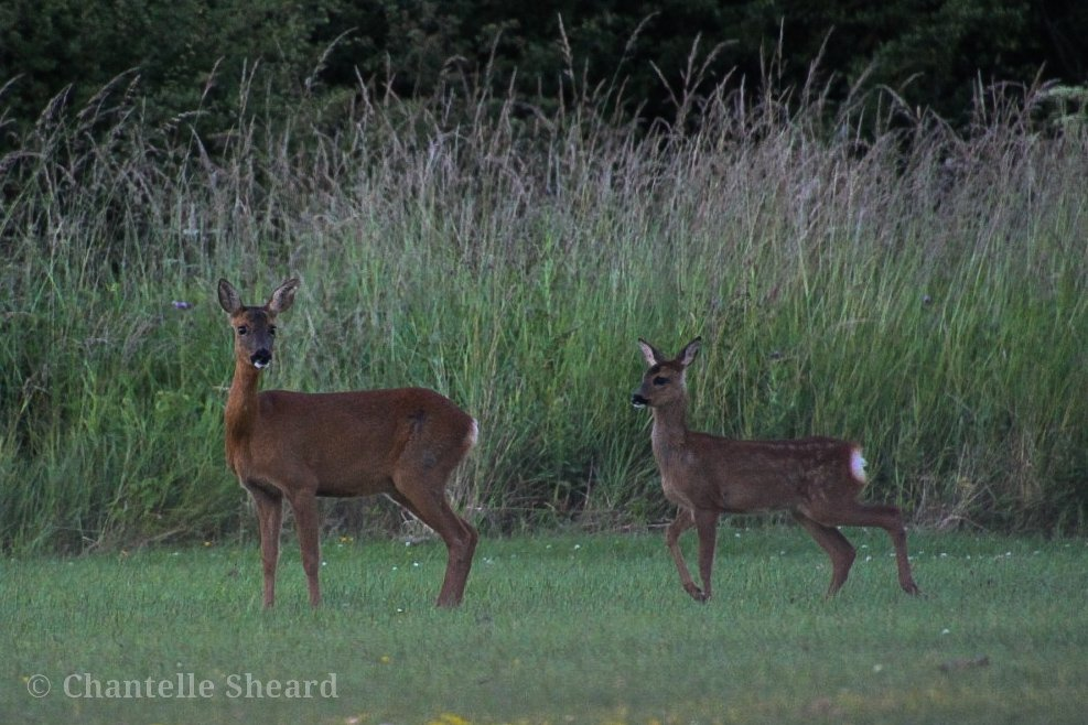 Very proud mommy and Fawn by baileyadam