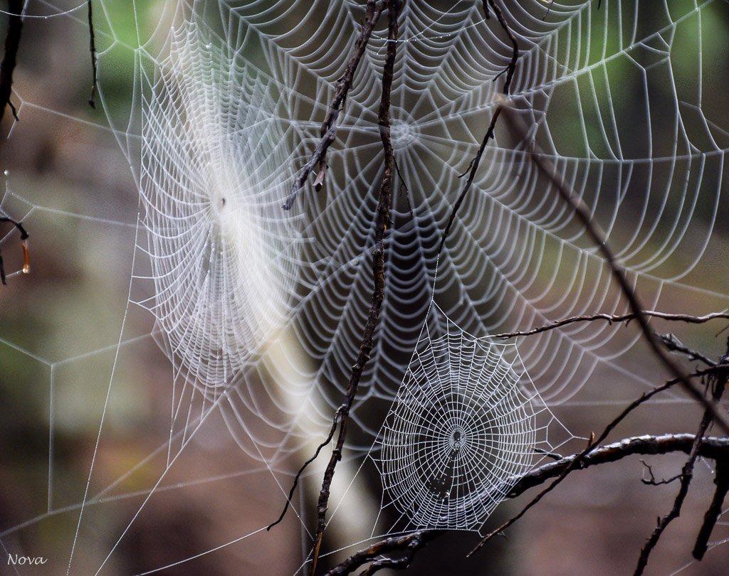 3 webs by novab