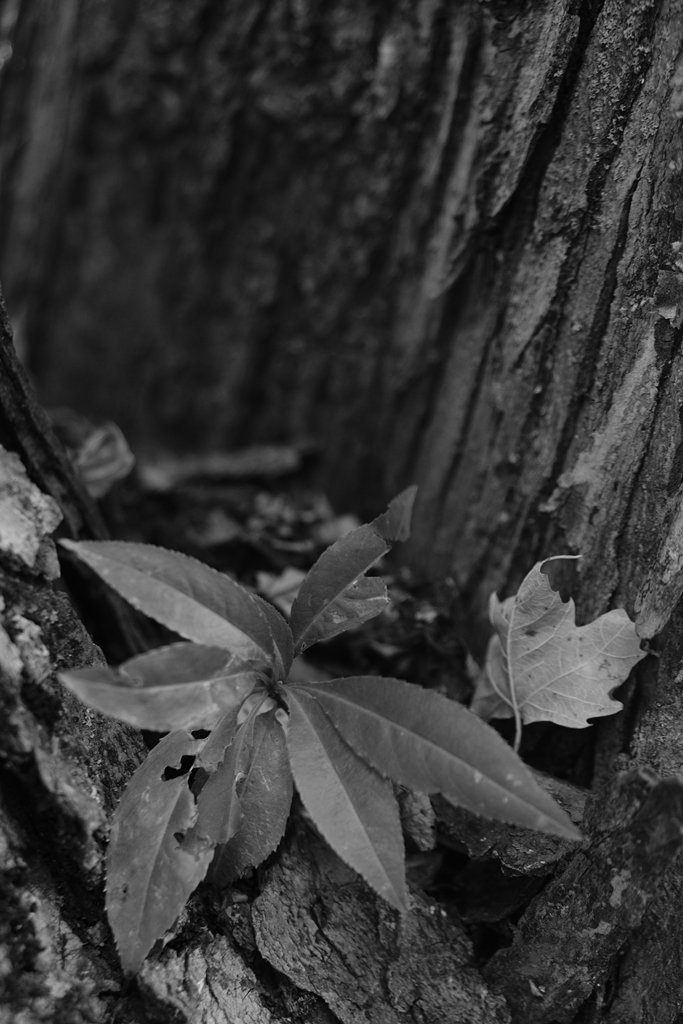 Dicot? - NF-SOOC by lsquared