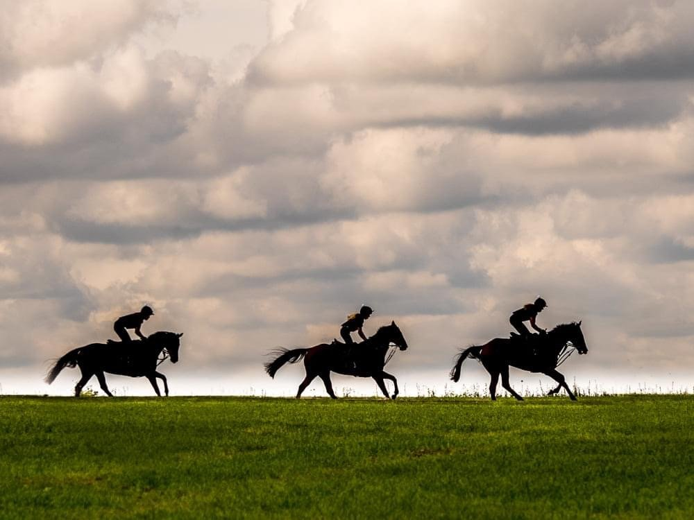 Off the gallops by barrowlane