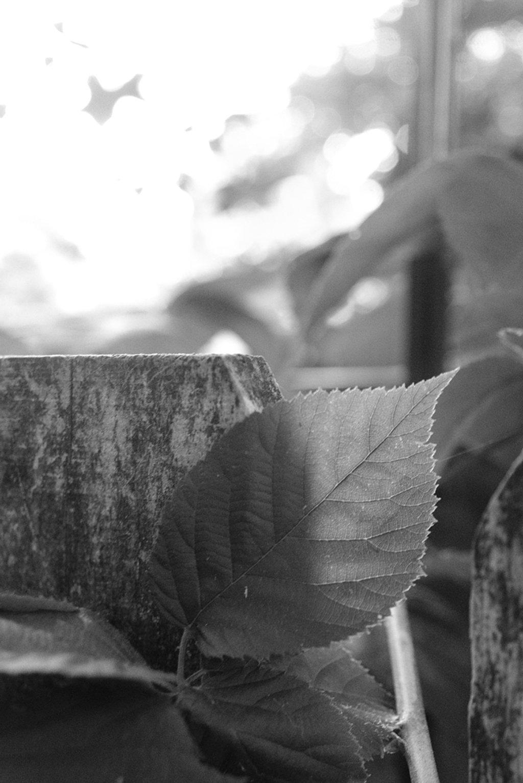 Leaf.  NF-SOOC by lsquared