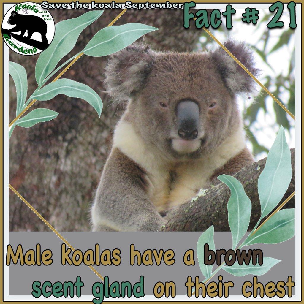 ooey gooey smelly belly by koalagardens