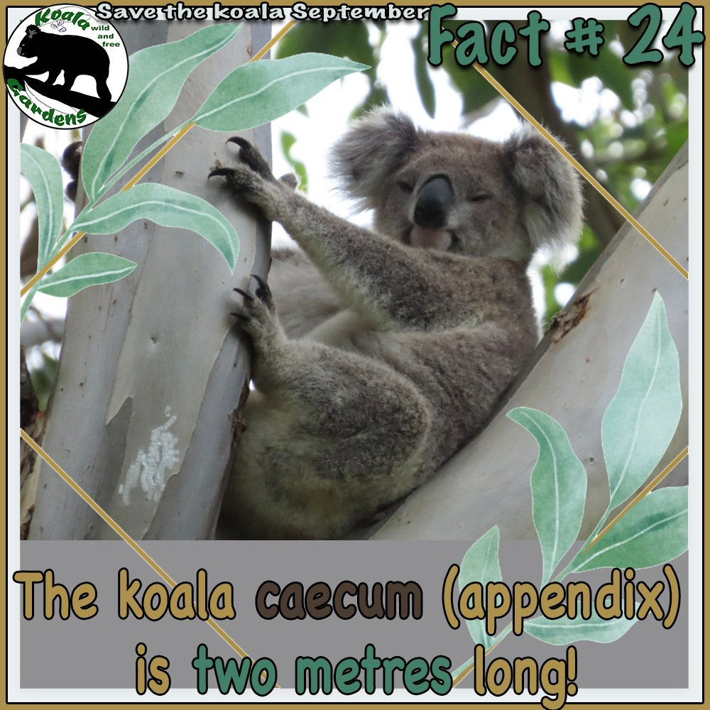 it was how big? by koalagardens