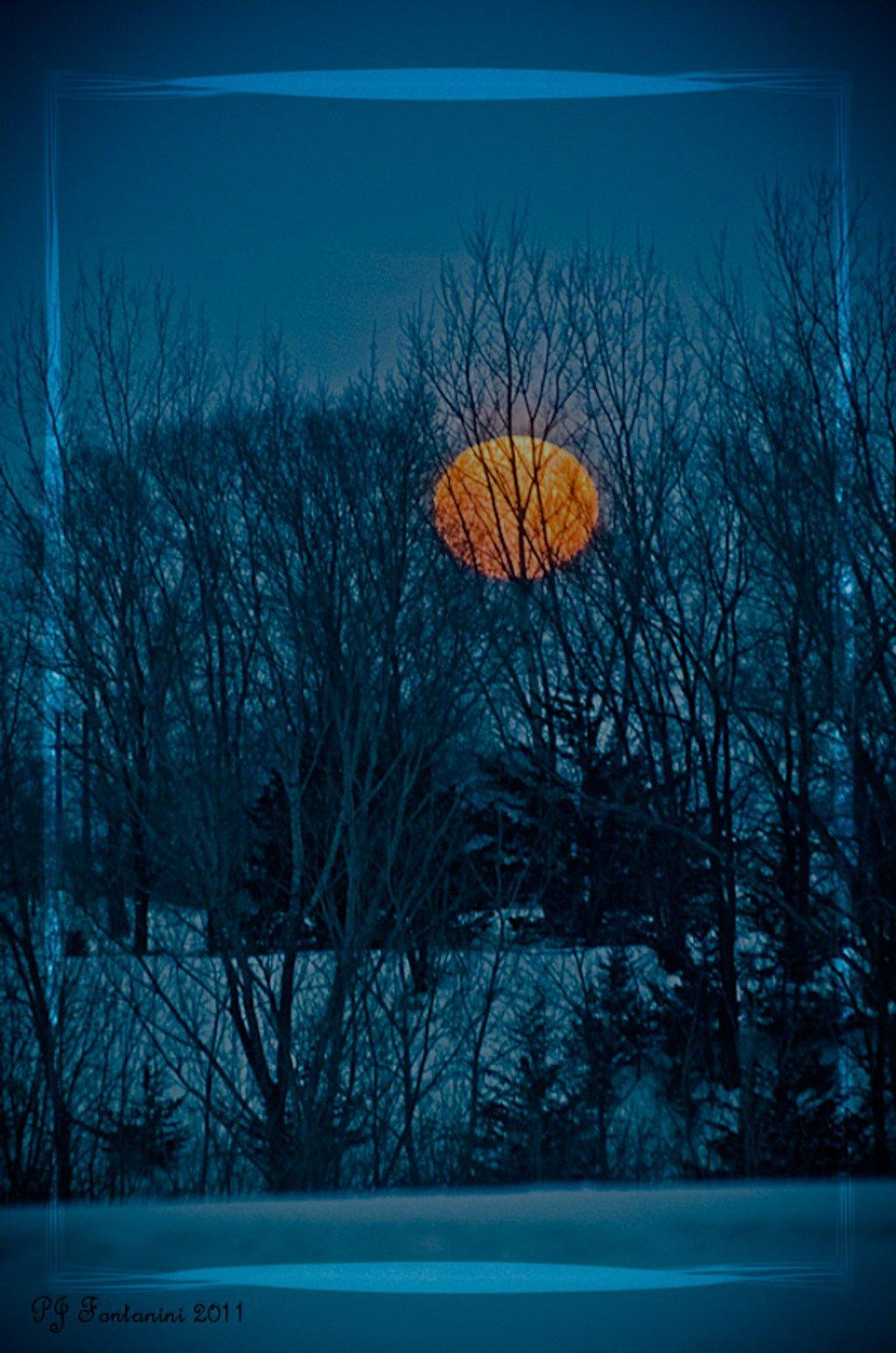 Orange Delight by bluemoon