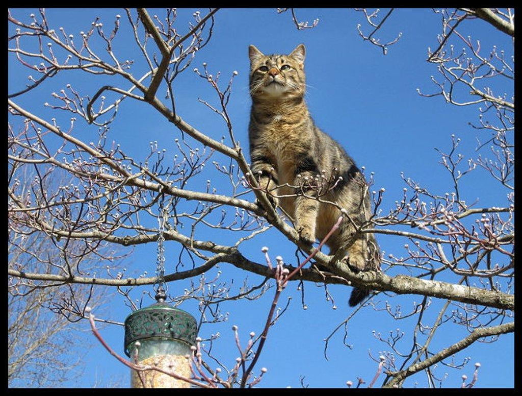 Bird Watching by cjwhite