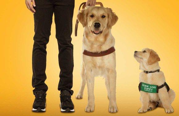 Chromecast-tips week 3: Strippers, puppies en een mol