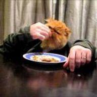 Ces animaux qui mangent avec des bras humains
