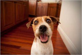 PetChatz - De la visio avec ton chien