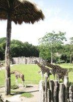 Für die europäischen Giraffen im Zoo Leipzig wurde extra ein Sonnenschirm gebaut.