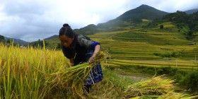Asien - Hoang Dinh Nam AFP