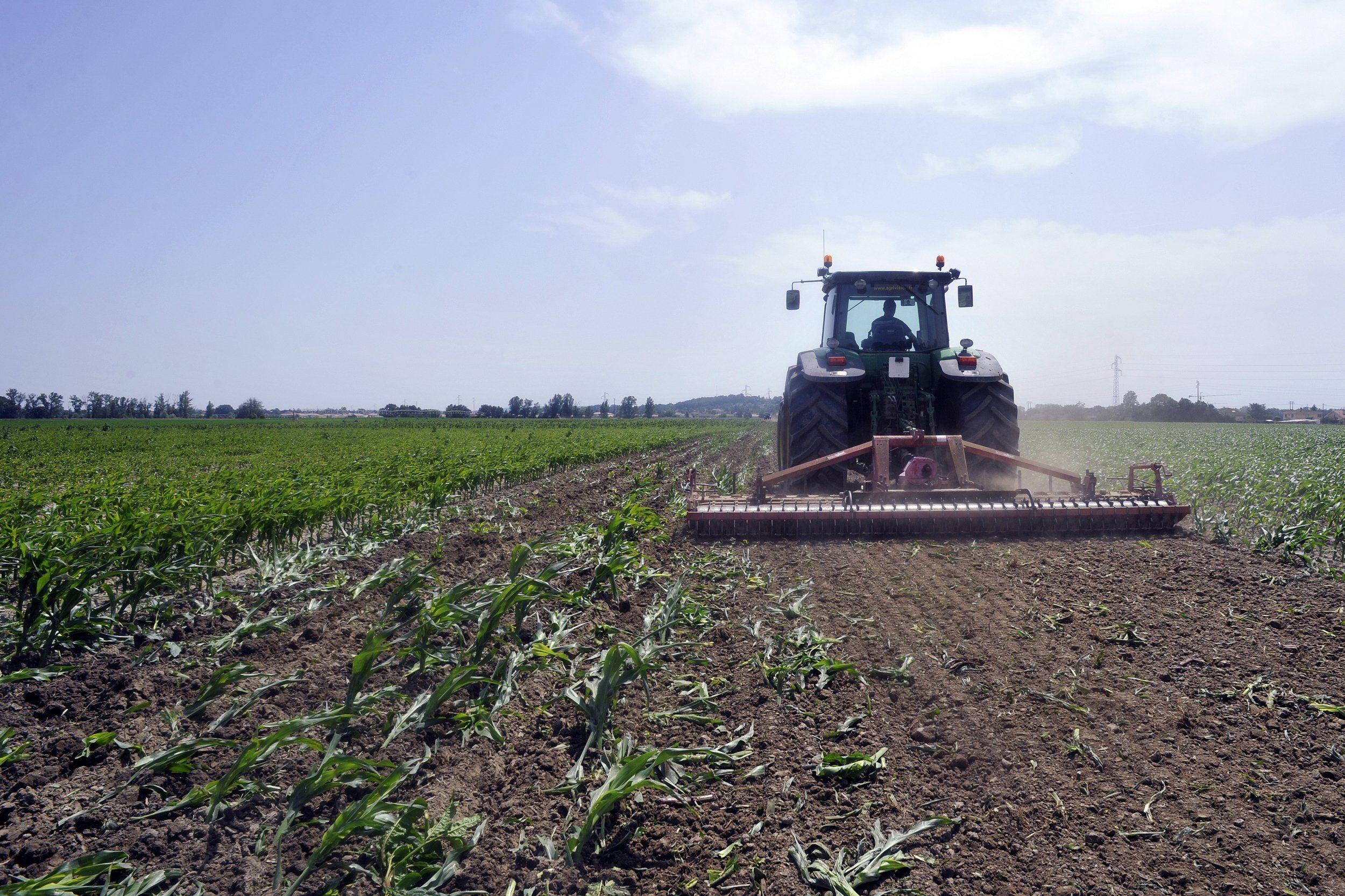 Französischer Bauer auf dem Feld