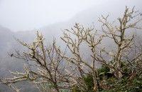 Am Rande des Nebelwalds auf La Gomera.