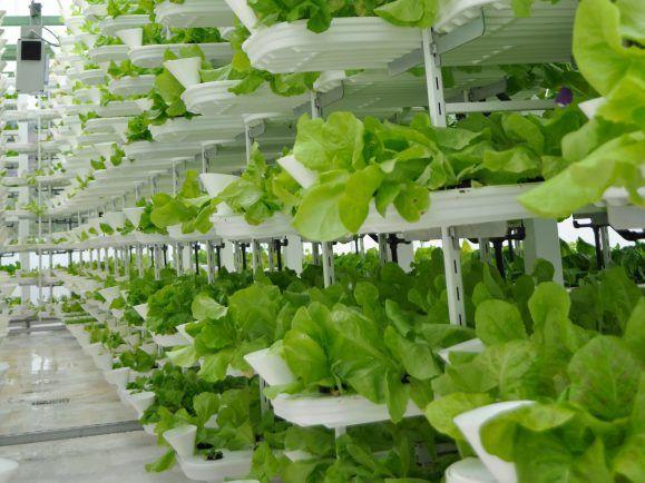Das VertiCrop-System für die vertikale Landwirtschaft.