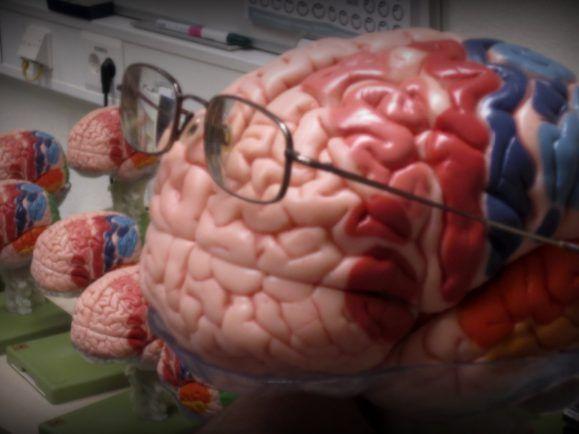 Gehirnbereiche unterscheiden zwischen Gut und Böse.