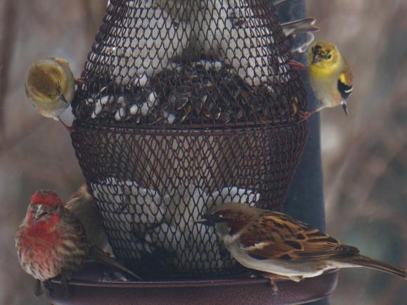 Viele heimische Vögel sind in der kalten Jahreszeit auf Futtersuche und freuen sich über unsere Hilfe bei der Überwinterung.