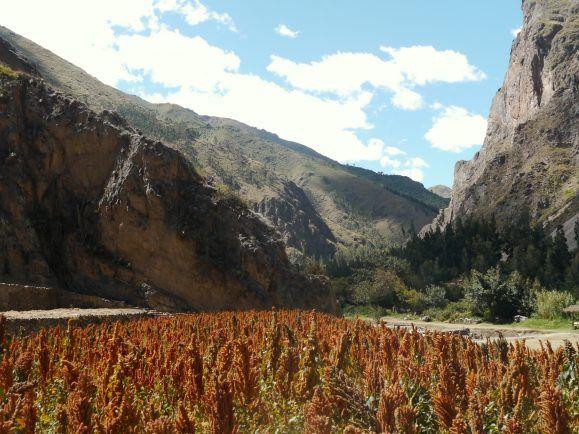 Das ursprüngliche Anbaugebiet von Quinoa liegt in den Anden.