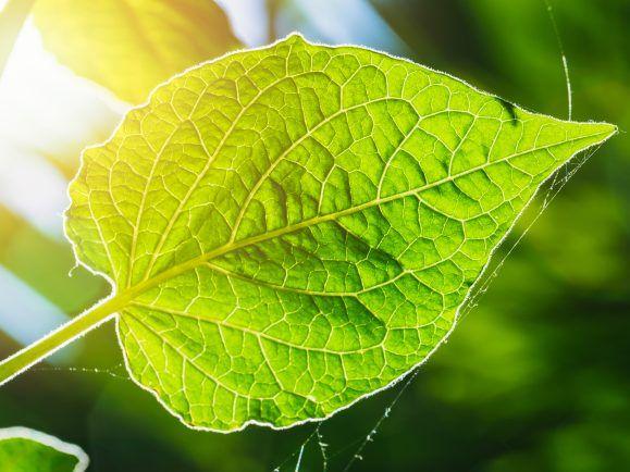 Künstliche Fotosynthese