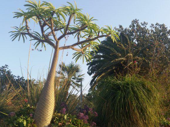 Pflanzenjaeger