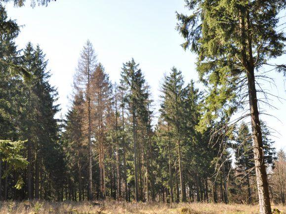 Forstleute