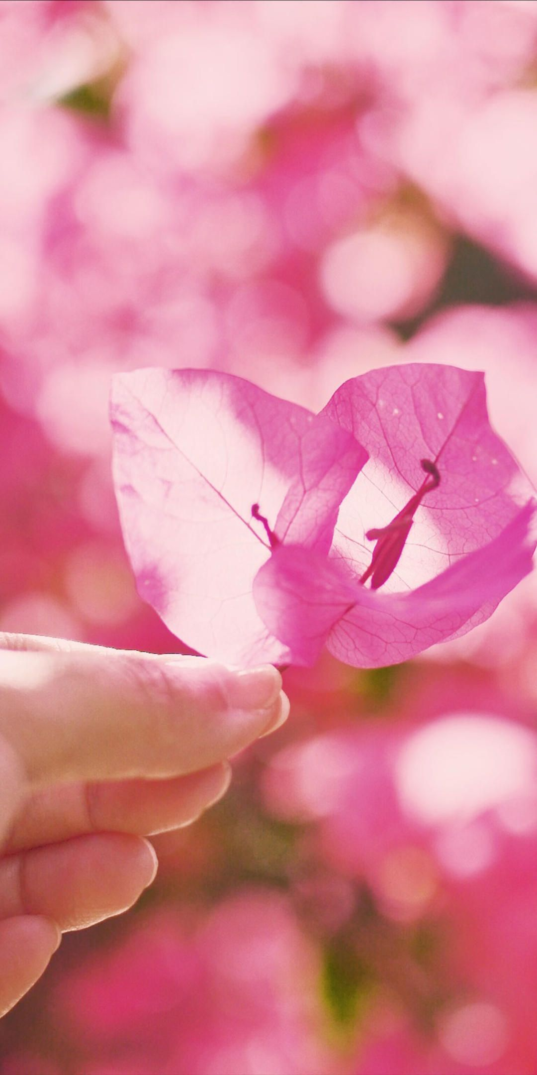 5e67b894e11fa - 粉色系少女心手机壁纸