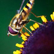 手机壁纸:蜜蜂、瓢虫、花插图11