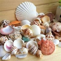 MENGXIANG 100g Jewelry Beach Seashells Sea Shells for DIY