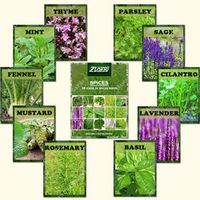 ZLKING 1100 Spice Combo Mix Flower Seeds Herb