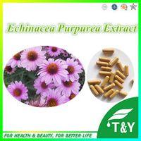 Pure Natural Health Echinacea Purpurea P.E. 10:1 Capsule  500mg*200pcs