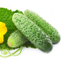 Skunhe Terrace Vegetable Autumn Melon Cucumber Seed Plant