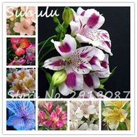 Suhulu Rare Lily seeds 200 Pcs Peruvian seeds Perennial