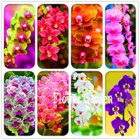 YHNOO Loss Promotion 100 Seeds Pack plant for home garden