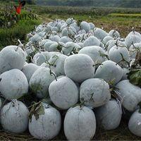 YIMEISR /Wax Gourd/ Benincasa hispida 20Seeds/bag Organic